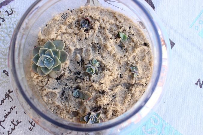 Little succulent garden in a glass vase.